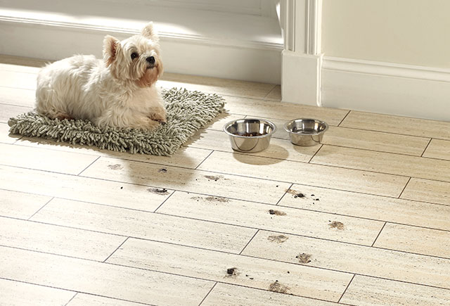 Travertine%20tile%20dog%20lvt